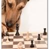 играет в шахматыCheck.jpg
