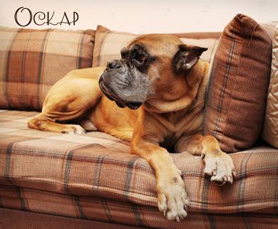 Портал любителей собак